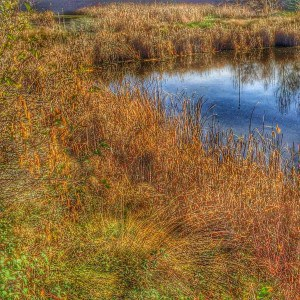 Another lovely shot of the wetlands by Jacks Urban Eats off Sierra College Blvd in Roseville CA by Kaye Swain REALTOR