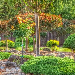 A lovely view At Woodbridge ranch in Roseville and Orangevale CA via Kaye Swain REALTOR