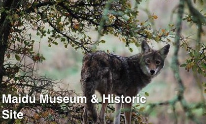 Maidu Museum and Historic Site in Roseville California via Real Estate Agent Kaye Swain