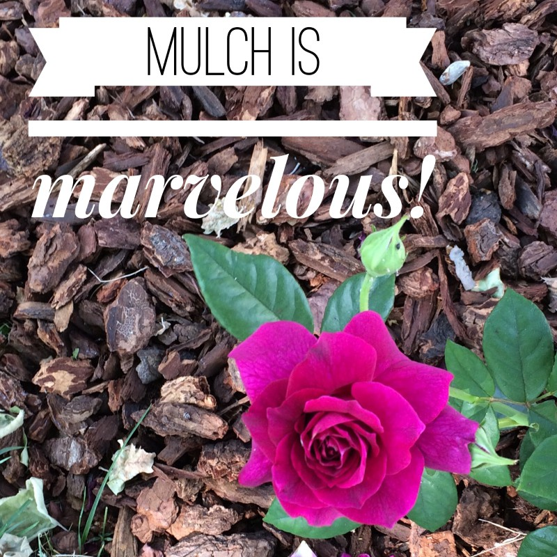 Mulch is a great low-cost way to use less water during this season of drought via Roseville CA REALTOR Kaye Swain 800