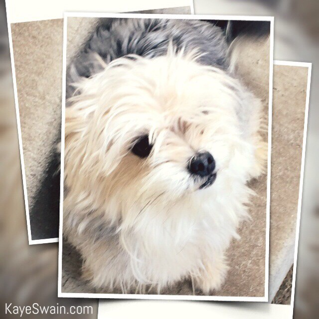 My granddog wants to mention that Roseville CA offers plenty of dog parks as well via Kaye Swain REALTOR