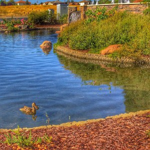 A large wall with water it looks like a fairy pond garden with a cute duck at Sun City Roseville CA
