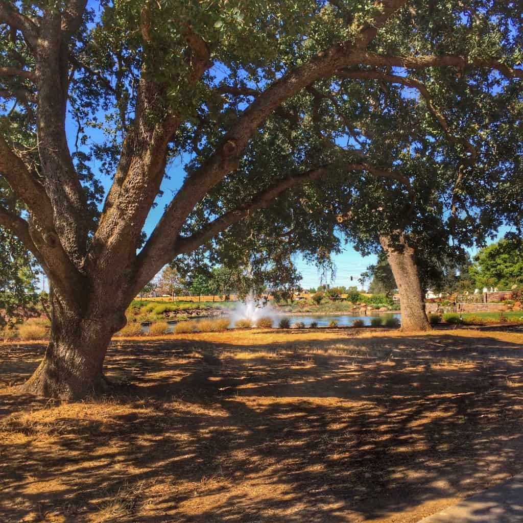 Magnificent Weather In Garden Grove Ca Composition - Brown Nature ...