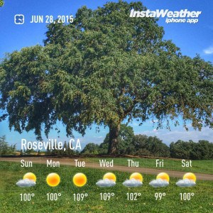 Temps are high but shade is great in Sun City and West Roseville CA walking trails via Kaye Swain REALTOR