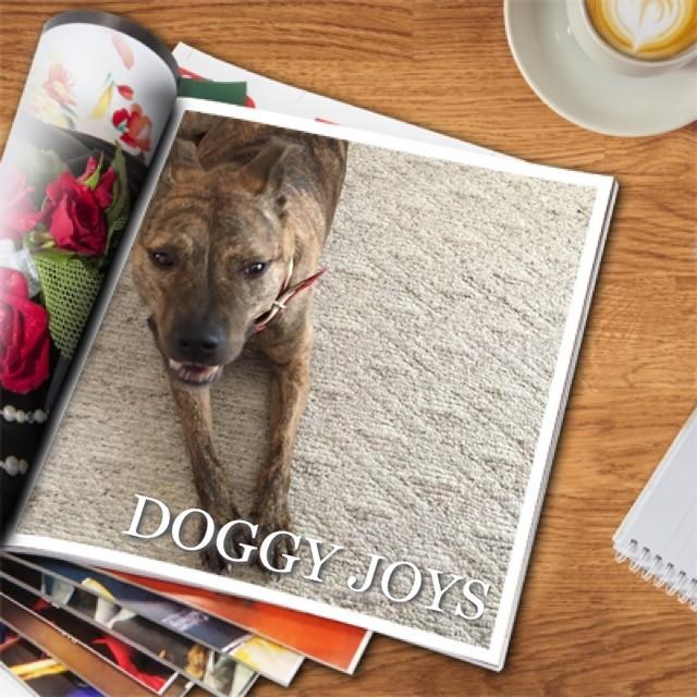 Some of the Roseville CA parks offer Doggy joys via REALTOR Kaye Swain