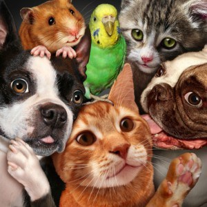 Whatever your pets there should be pet hospitals veterinarians services and supplies near you in Roseville CA via Kaye Swain