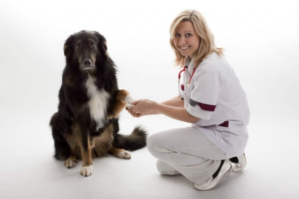 need a veterinarian for your dog-Roseville CA has 24 hr veterinarians hospitals to help you and your pets via pet friendly Kaye Swain Real Estate Agent in Roseville CA