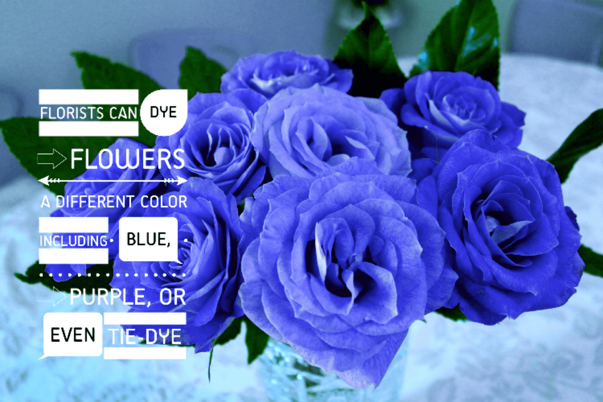 Blue roses make me smile as i work at being a real estate for How are blue roses made
