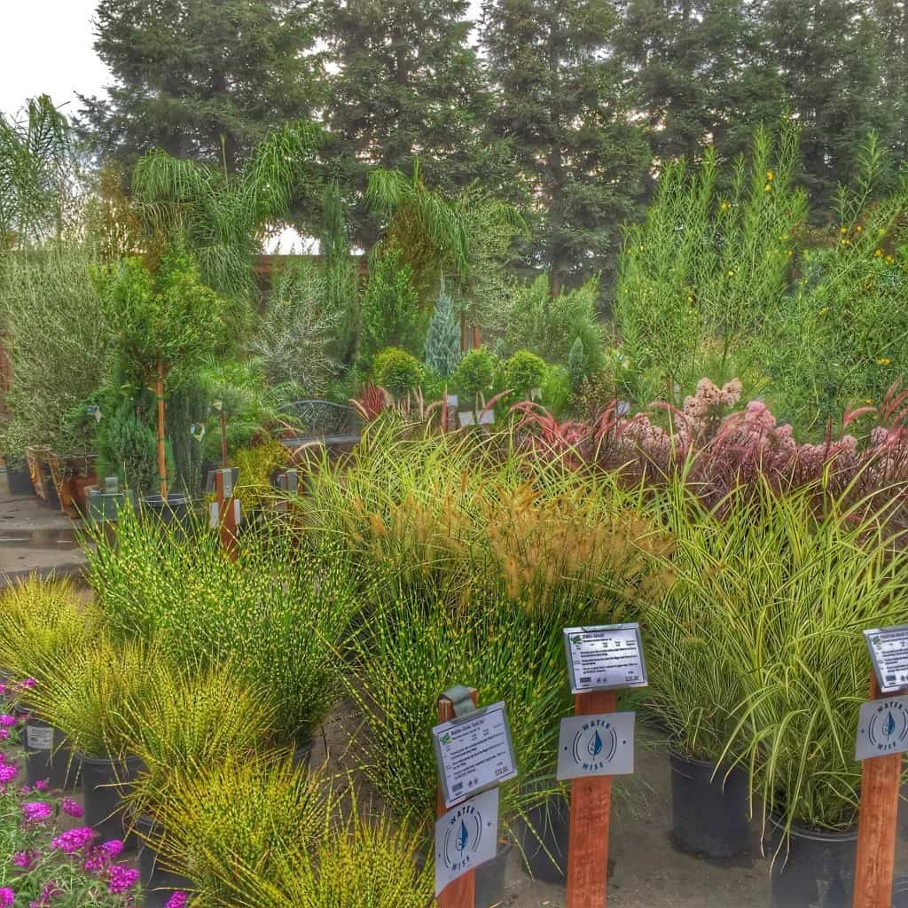 Kaye Swain Roseville CA real estate agent blogger loves Green Acres home yard and garden plants and iron decor