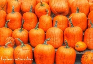 Kaye Swain Roseville CA real estate agent blogger loves autumn and pumpkin home yard and garden iron and other decor ks