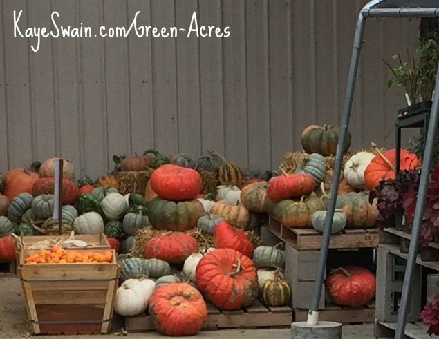 Kaye Swain Roseville CA real estate agent blogger loves autumn home yard and garden iron and other decor ks