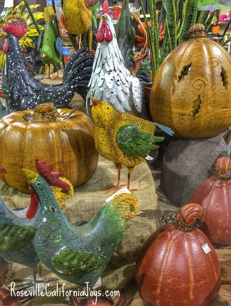Lovely autumn home decorations at Green Acres fruit and trees and plant nursery via Roseville CA real estate agent and blogger Kaye Swain ks