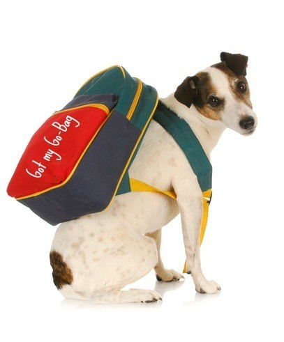 National Fire Prevention Week reminder that Go Bags good for young old as well as dogs and granddogs