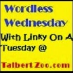 Kaye Swain Roseville CA real estate agent blogger visits Talbertzoo for Wordless Wednesday with linky on Tuesday Fun