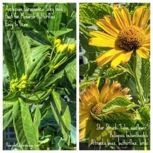Roseville California Joys real estate agent blog Kaye Swain Wordless Wednesday Senior Gardening Joys Autumn