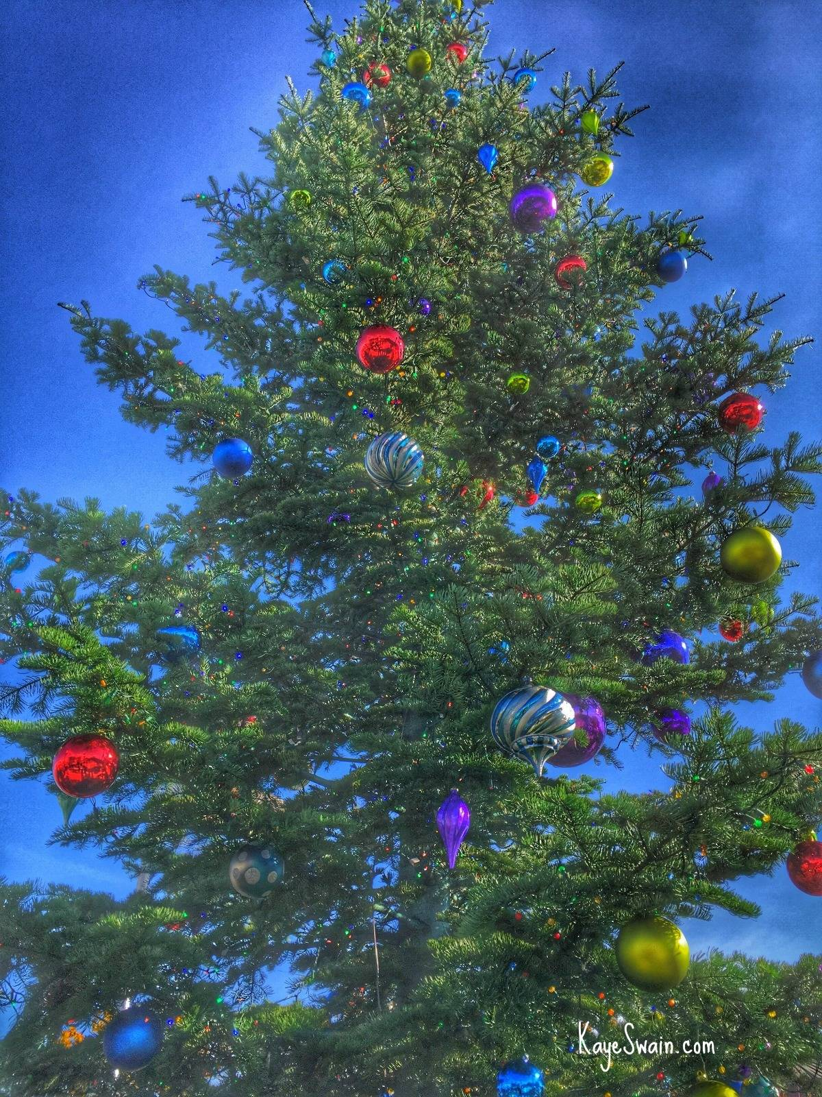 Kaye Swain Roseville CA real estate agent blogger sharing the gorgeous Christmas Tree in the Downtown Square