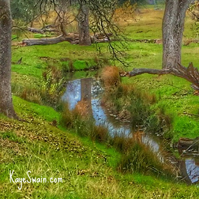 Kaye Swain neighborhood REALTOR loves the walking trails and creeks in West Roseville CA with water from El Nino