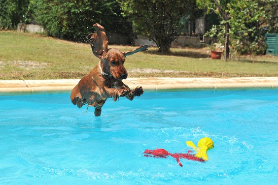 Kaye Swain Roseville real estate agent recommends buy houses with swimming pools beat the heat