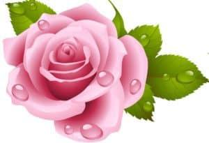 Kaye Swain Roseville Sacramento REALTOR pink rose