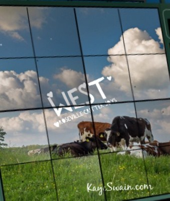 Kaye Swain Real estate agent Roseville CA shares cows