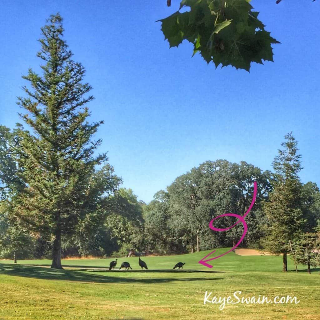 Kaye Swain Roseville Real Estate Agent shares turkey smiles West Roseville golf course