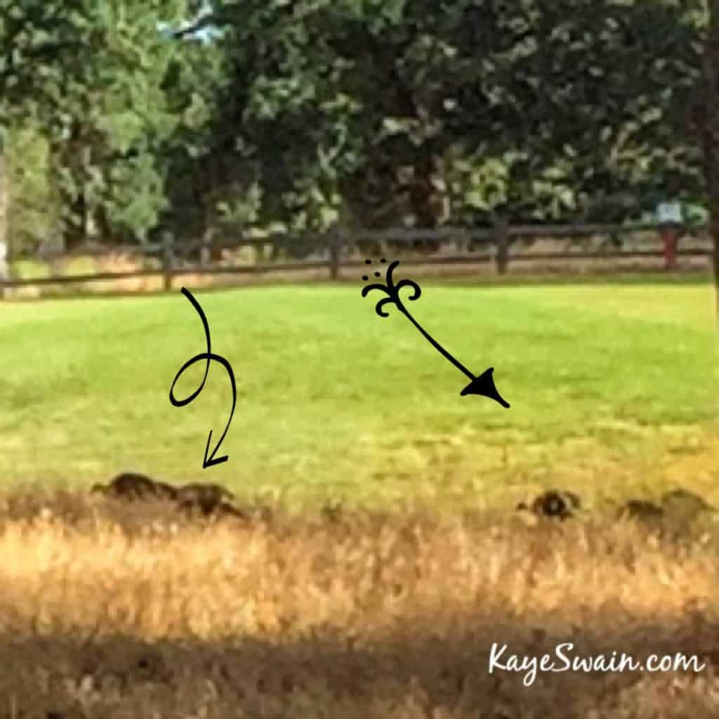 Kaye Swain West Roseville real estate agent shares cute turkey babies