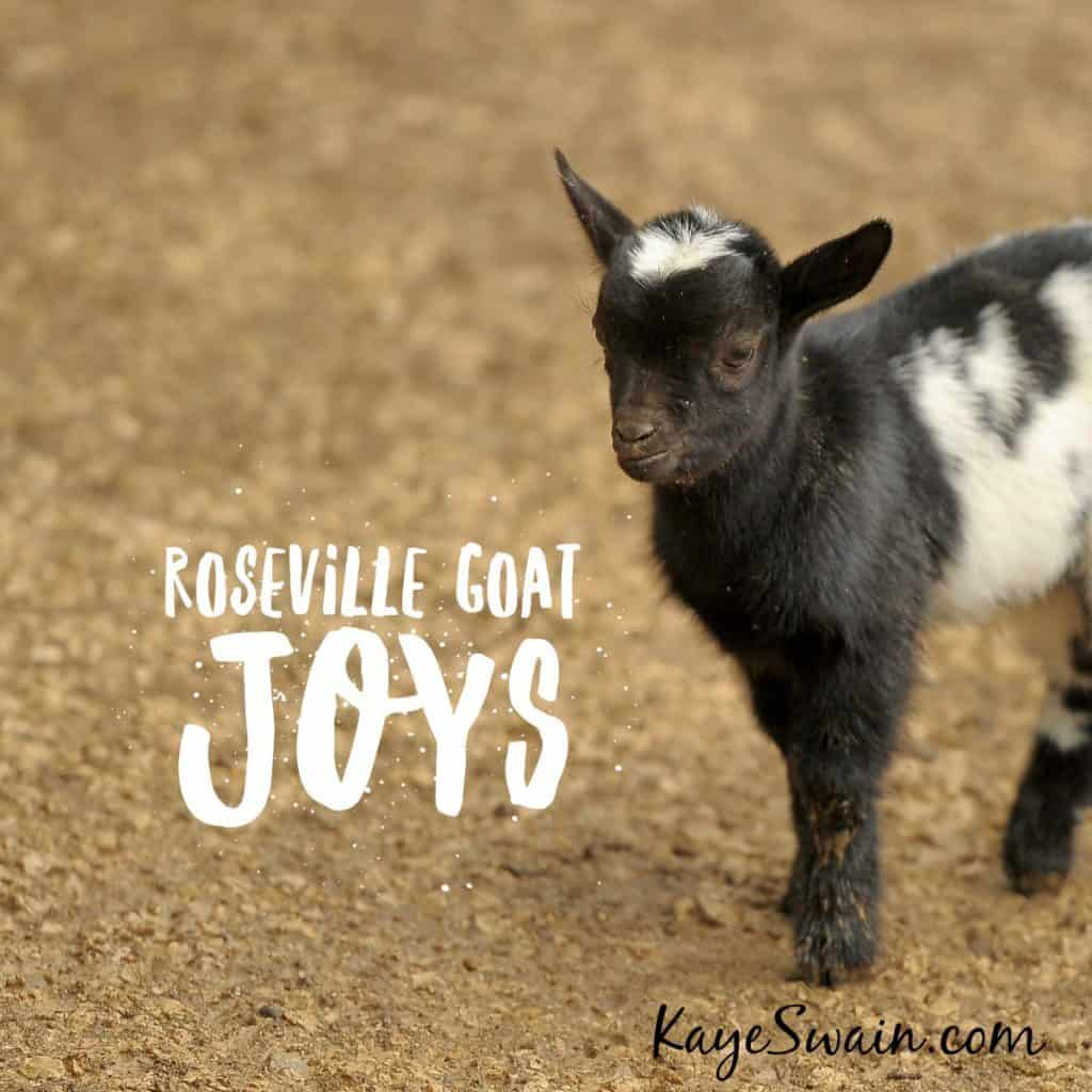 One reason Kaye Swain loves living in Roseville CA is the cute goats
