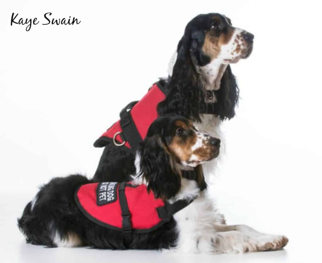 Kaye-Swain-Roseville-Real-Estate-Agent-shares-service-dogs-resources
