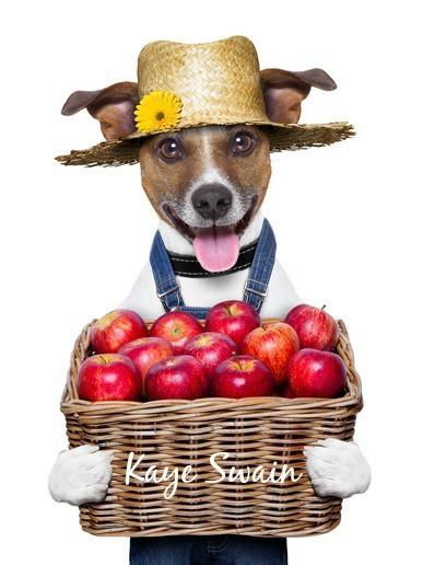 Kaye Swain Roseville Real Estate Agent sharing Apple Hill Autumn Joys