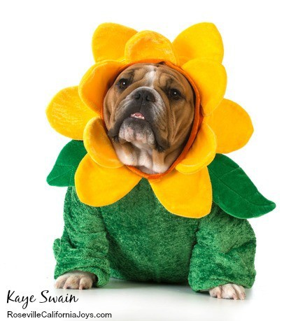 Kaye Swain Roseville Real Estate Agent sharing Halloween Holiday costume ideas