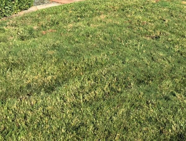 good curb appeal means keeping lawn watered trimmed neat