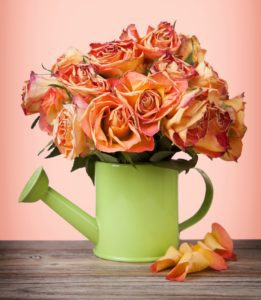 A bouquet of vintage roses in green watering can on pink background