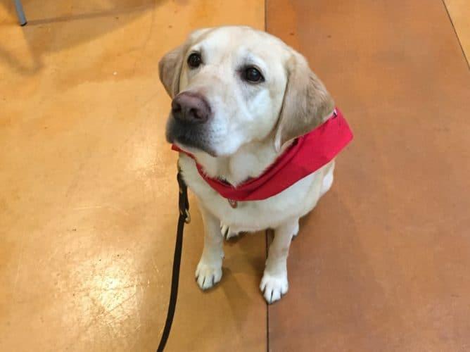 Disability Awareness Resources Fair Riley Park Roseville CA Kira Library Dog