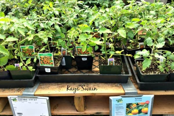 Green Acres Nursery Roseville CA tomatos 2017 via Kaye Swain REALTOR wm