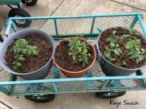 Kaye Swain Roseville REALTOR boomer senior specialist sharing elderly mom tomato plants wagon 1 wm