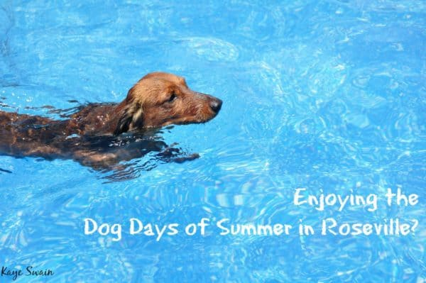 Cute Dog Days Summer Roseville smiles Kaye Swain Real Estate Agent wm 1200