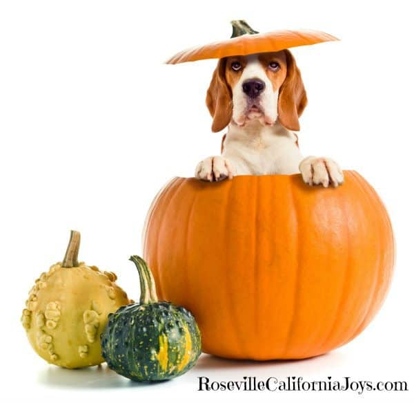 Enjoy Fun and Often Free Harvest Halloween Events In Roseville CA ...