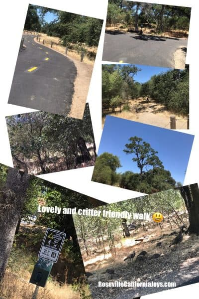 A lovely walk between Blue Oaks Park and Baquera Park Roseville CA