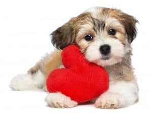 Kaye Swain Roseville REALTOR says have a PAWS-itively happy Valentine's Day