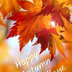 Happy Autumn from Kaye Swain Roseville REALTOR 916-768-0127